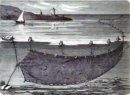sardinal